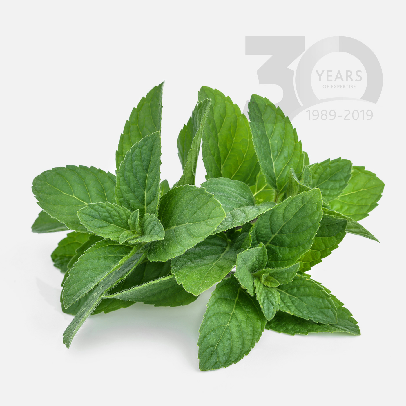 Using mint, unlock the possibilities for flavours, aromas and sweeteners in animal feed and pet food production