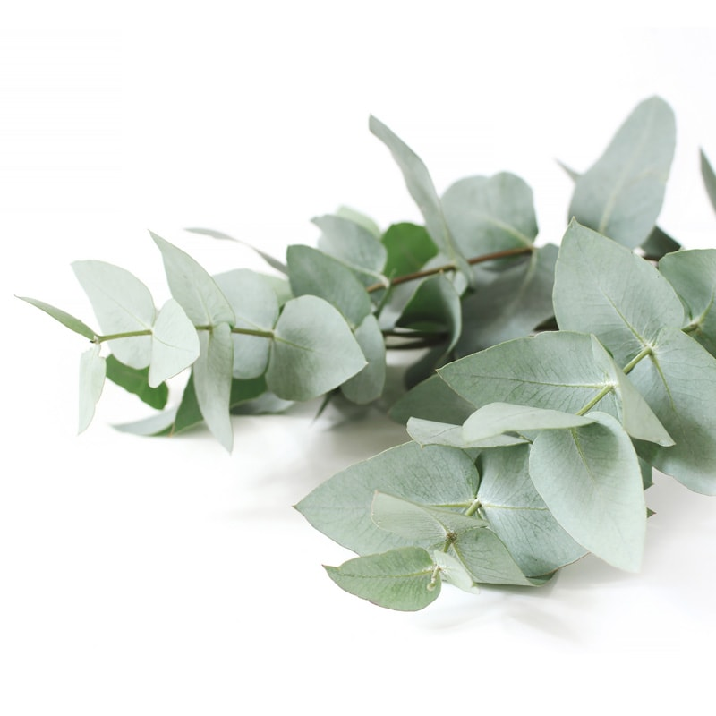 Eucalyptus, a popular flavour used by Inroads
