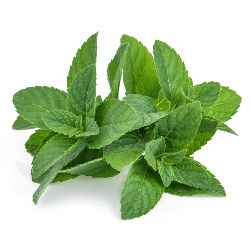Mint, a popular flavour used by Inroads